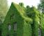 зелений будинок