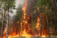 лес пожар ГосЧС